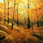 Why Leaves Fall in Autumn