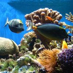 Rising Threats to Coral Reefs