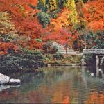 Travel to Historic City of Kyoto Japan