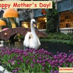 Interesting Facts about Mother's Day Celebration