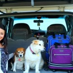 A Fur Parent's Guide to Traveling with a Dog