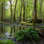 Greenpeace Romania Turns to Witchcraft to Fight Illegal Logging