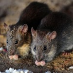 Hantavirus Facts You Need to Know Before You Panic